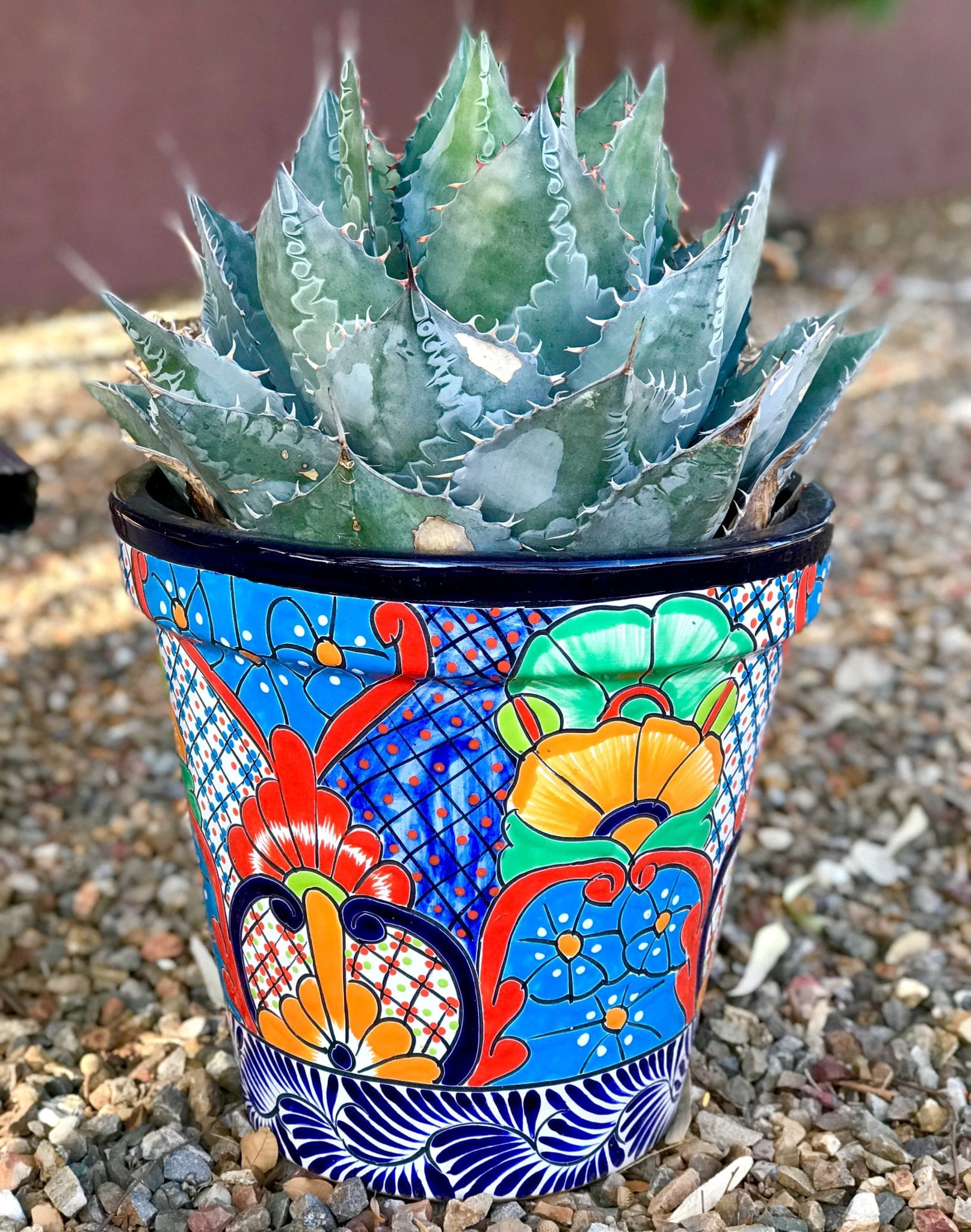 succulents, cactus, carefree plants, easy plants,