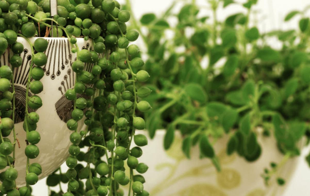 succulents, gardening, plants, spring gardening, gardening tips,