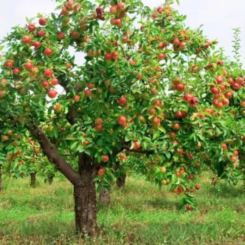 plants, green living, fruit trees, fruit, gardening tips