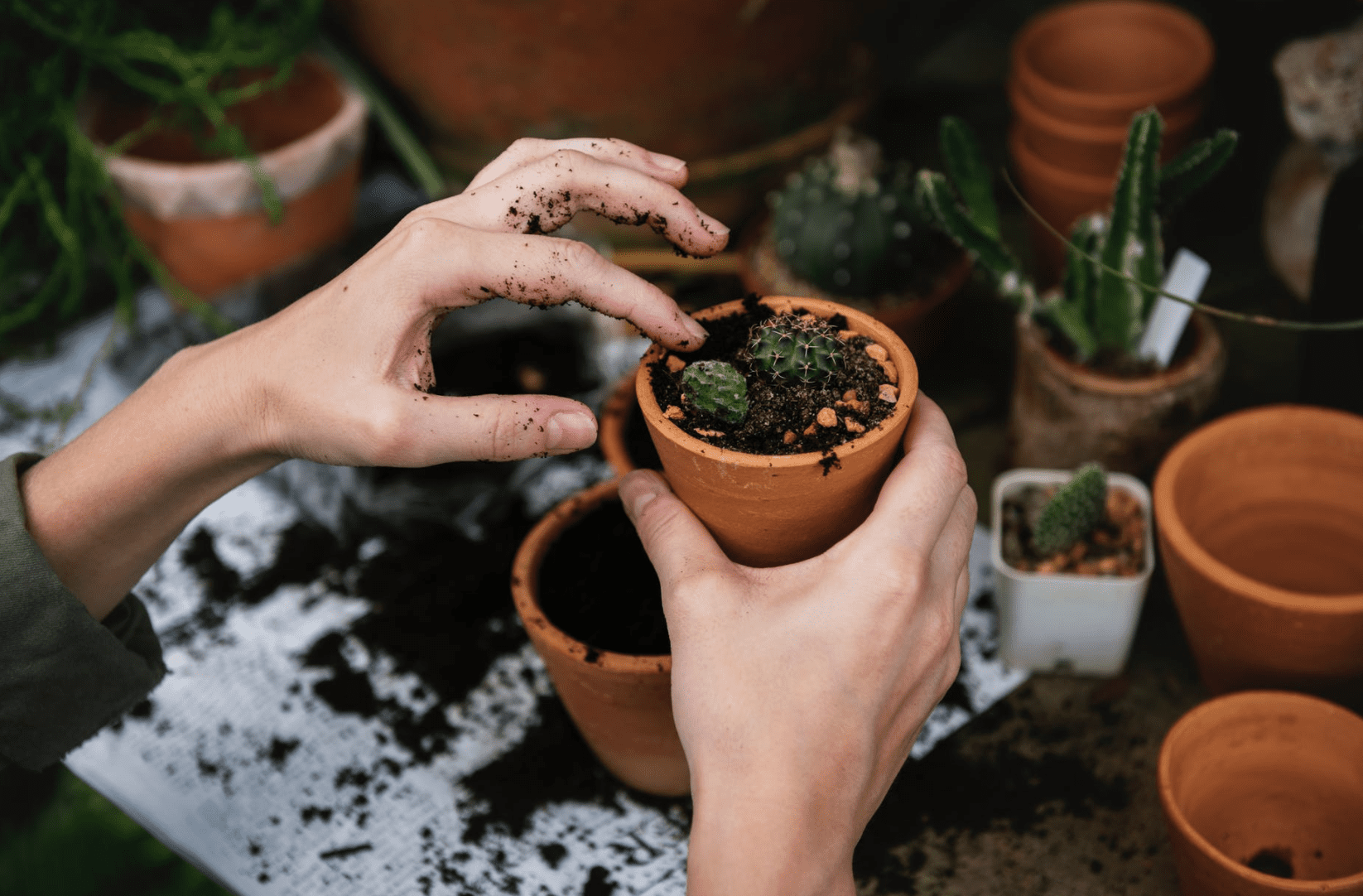 plants, planting, gardening, spring gardening,