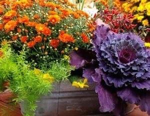 Fall flowers, plant fall flowers