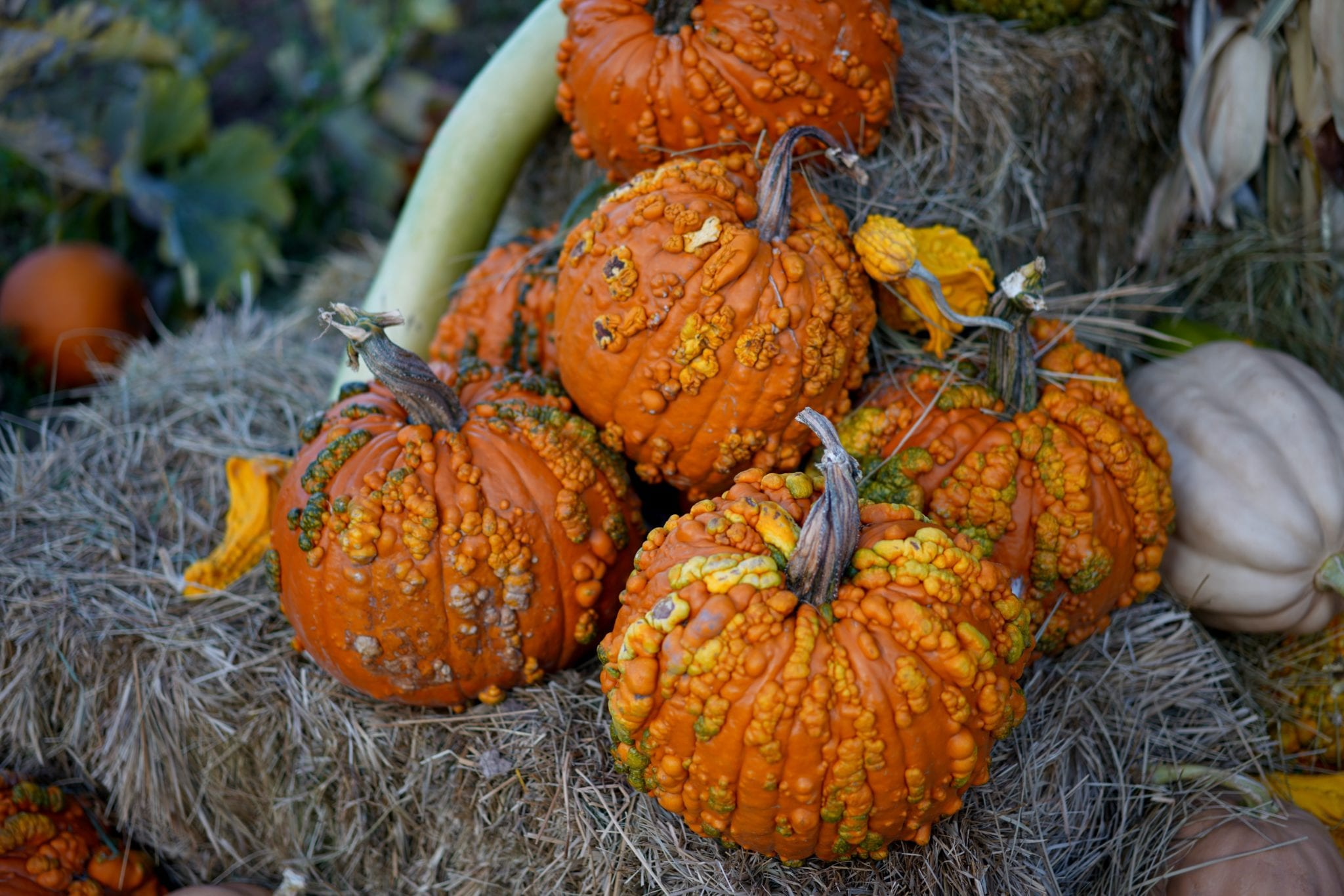 Fall decor, pumpkins, fall decorations, fall decorating tips,