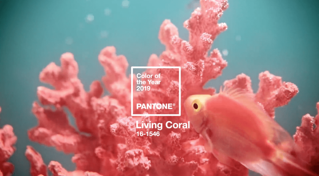 coral, pantone color of the year, pantone 2019