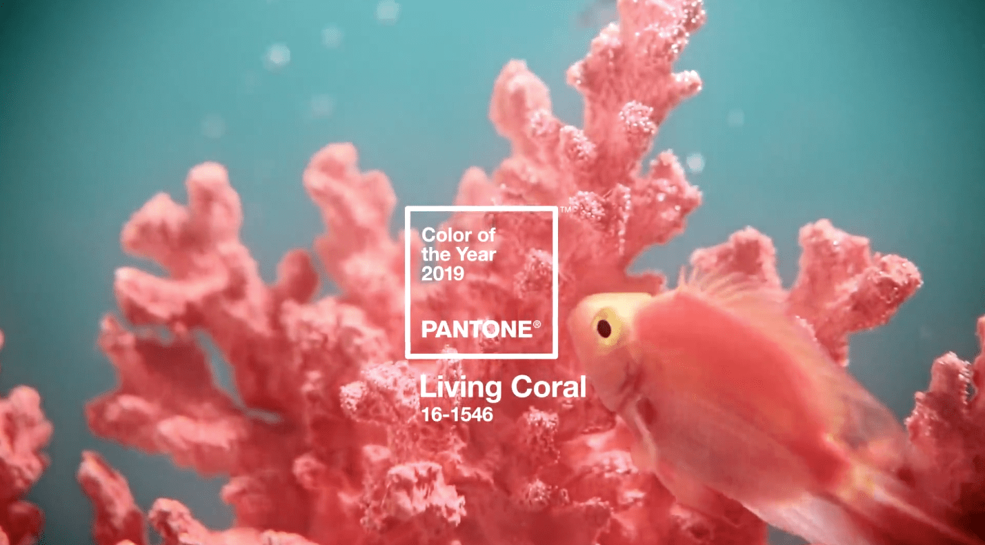 coral, pantone color of the year, pantone 2019