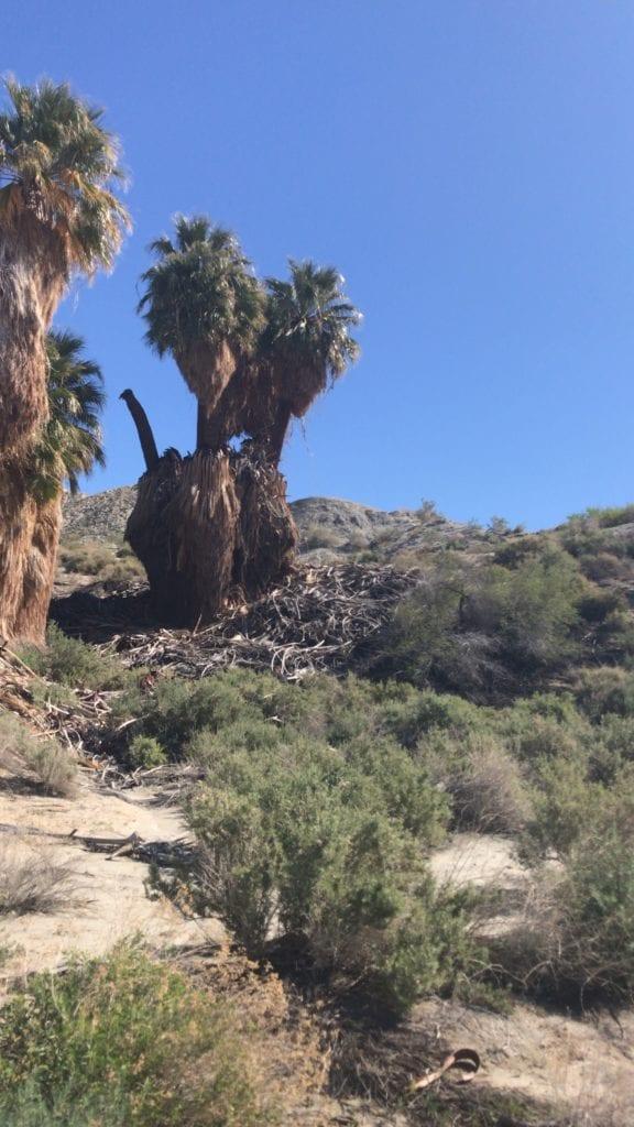 palm desert, palm springs,