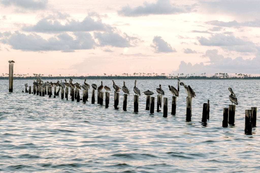 Mississippi Coastline, egrets, old pier