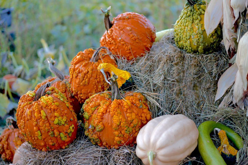 Gourded pumpkins