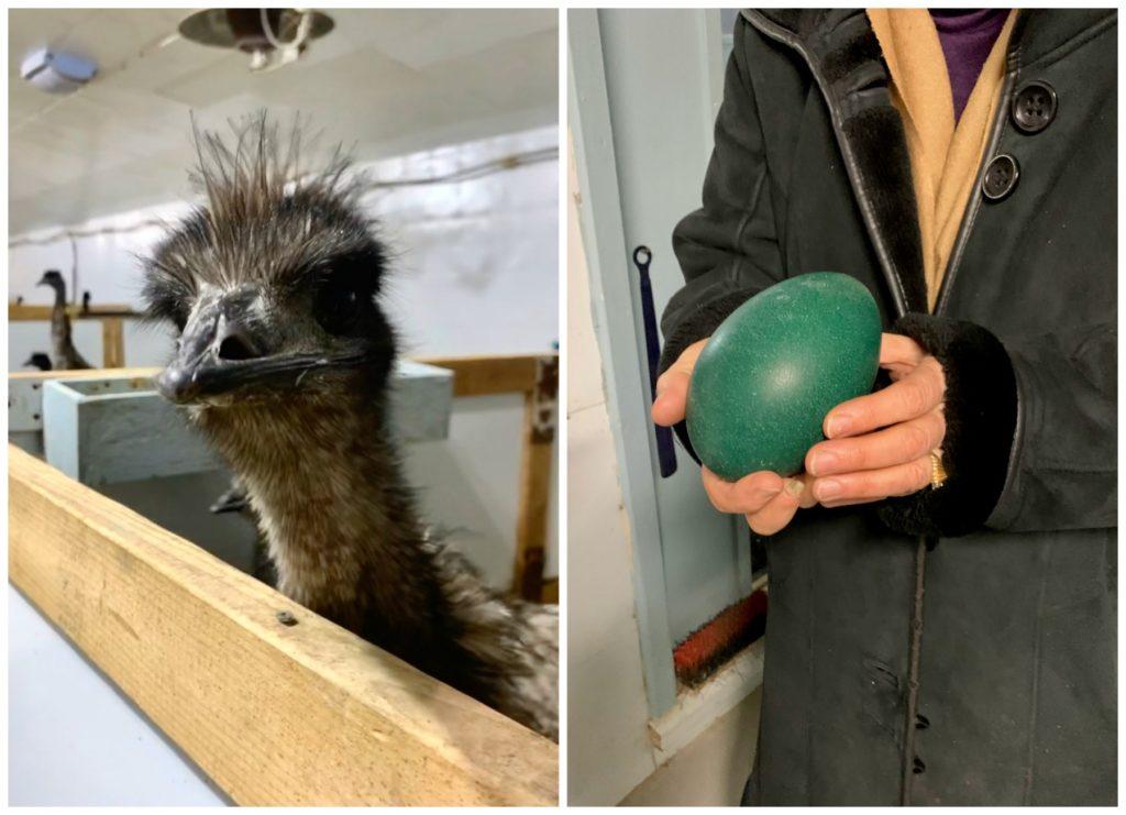 Centre de l'Émeu, Emu face and Emu green egg
