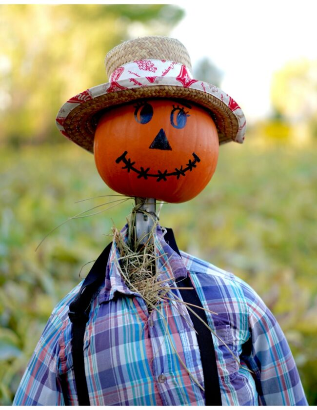 a scare crow with a pumpkin head in a pumkin field